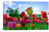 Beautiful tulips, Canvas Print