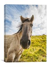 Why the long face?, Canvas Print