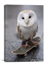 Skateboarding owl
