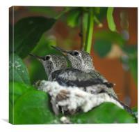 Twin Hummingbirds, Canvas Print
