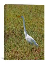 The Great Egret, Canvas Print