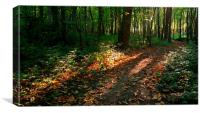 Autumnal West Wood, Canvas Print