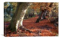 Coltishall, Norfolk, Beech Trees, Autumn, Canvas Print