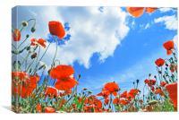 Poppies, Canvas Print