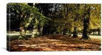 Tatton Autumn Trees, Canvas Print