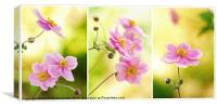 Japanese Anemone Triptych, Canvas Print