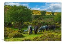 The Pony Sanctuary, Canvas Print
