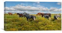 Dartmoor Ponies, Canvas Print