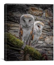 Owls in Conwy, Canvas Print