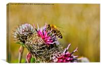Bee on Cacti, Canvas Print