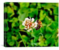 Landing Bee, Canvas Print