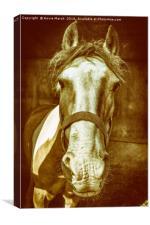 Pony, Canvas Print