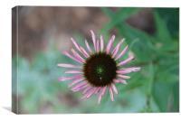 Wild Flower, Canvas Print