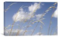 grass and sky_01, Canvas Print