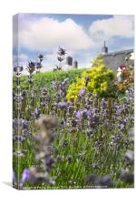 lavendar plant in garden setting, Canvas Print