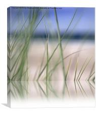 abstract beach grass sky 02 with reflection, Canvas Print