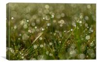 New Morning Bokeh, Canvas Print
