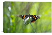Summer Butterfly on a Flower, Canvas Print