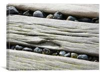 Sea Defense Timbers, Canvas Print