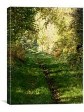 An Autumn Walk, Peddars Way, Canvas Print