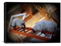 Funky Sheep, Canvas Print
