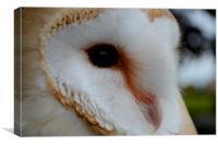 Barn Owl Profile, Canvas Print