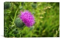 Pink Thistle Macro, Canvas Print