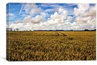 Lancashire Meadow, Canvas Print