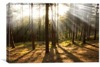 Sunbeams through the trees, Canvas Print