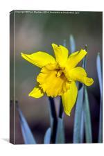 Spring has sprung, Canvas Print