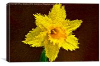Way of the exploding daffodil, Canvas Print