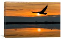Gull on her travels, Canvas Print