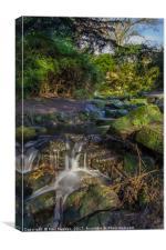 The Fairy Glen of Sefton Park, Canvas Print