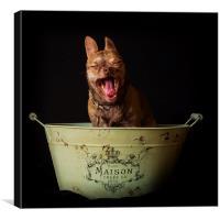 Bath time for dog, Canvas Print