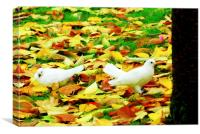 Doves in the autumn leaves, Canvas Print
