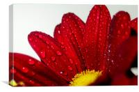 Flower in the rain, Canvas Print