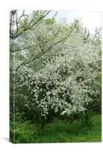 Flowering Tree, Canvas Print
