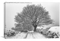 Snowy farm lane and tree, Canvas Print