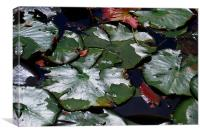 Leaves in the Pond, Canvas Print