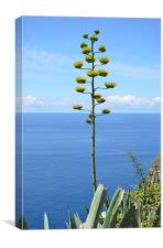 Inflorescence of Agave plant, Canvas Print