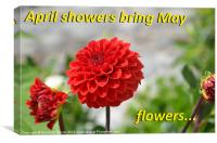 April Showers Bring May Flowers, Canvas Print