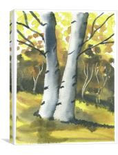 Silver Birch Forest, Canvas Print