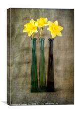 Daffodils, Canvas Print