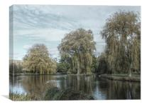 willows hdr, Canvas Print