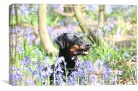 thelma in bluebells, Canvas Print
