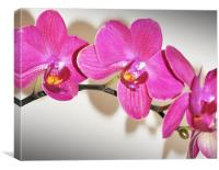 orchid cute pink, Canvas Print