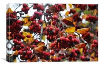 autumn red berries birdy food, Canvas Print
