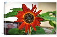 sun flower, Canvas Print