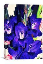 amazing purple gladiolus bright flower, Canvas Print