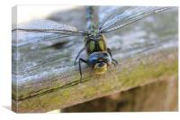 dragonfly happy face, Canvas Print
